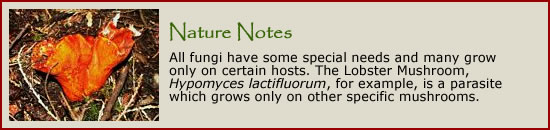 Learn more about fungi by clicking here.