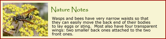Click here to visit the Bug World