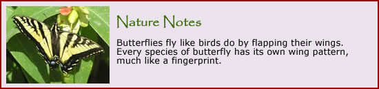Click here to visit our pages featuring butterflies and moths.