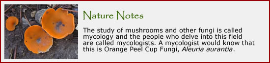 To learn more about fungi, click here.