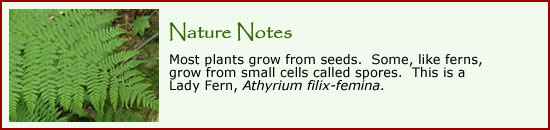 Click here learn more about ferns.