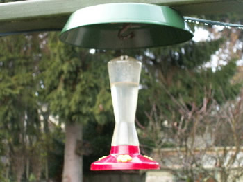 Hummingbird feeder with protective cover