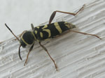 Bug of the Month