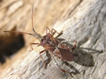 Insect of the Month