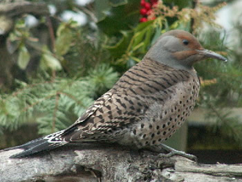 Flicker on Log