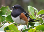Bird of the Month -  click to visit