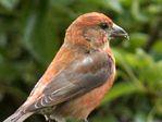 Sept Bird