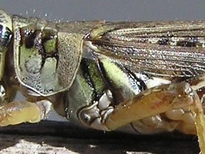 Close-ups In Nature