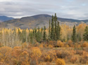 Yukon in Autumn