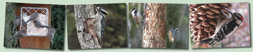 Tips and Tricks for the Backyard Birder: Feeders