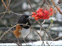 Tales from the Deck: Birds and their Berries