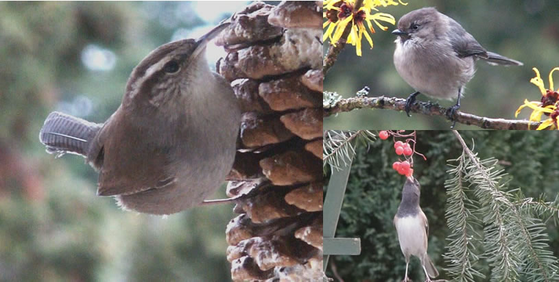 Birds love the food at the All Natural Restaurant