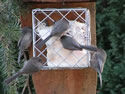 Suet Block Feeders