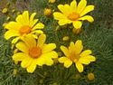 Wildflower Garden - Tread softly and discover the flower of the month, explore our photo galleries and do some jigsaw puzzles.