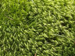 A Look at Mosses